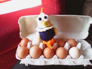 Gallinita-vizca-con-sus-huevos